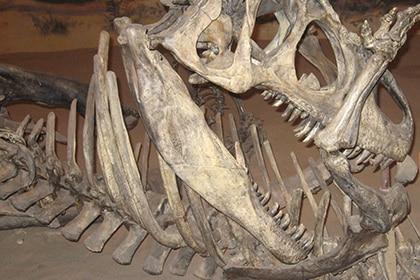 Allosaurus versus Camptosaurus.